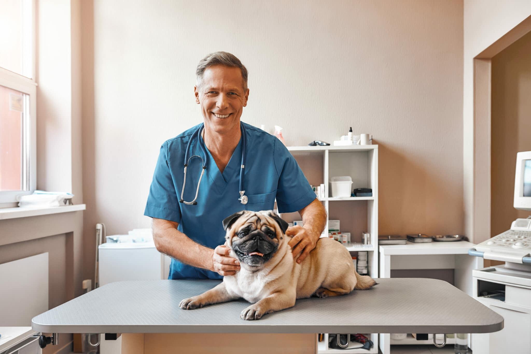Comment devenir vétérinaire