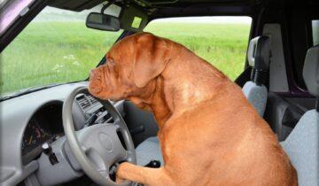 Anthropomorphisme et chien : bien-être ou mal-être pour nos compagnons?