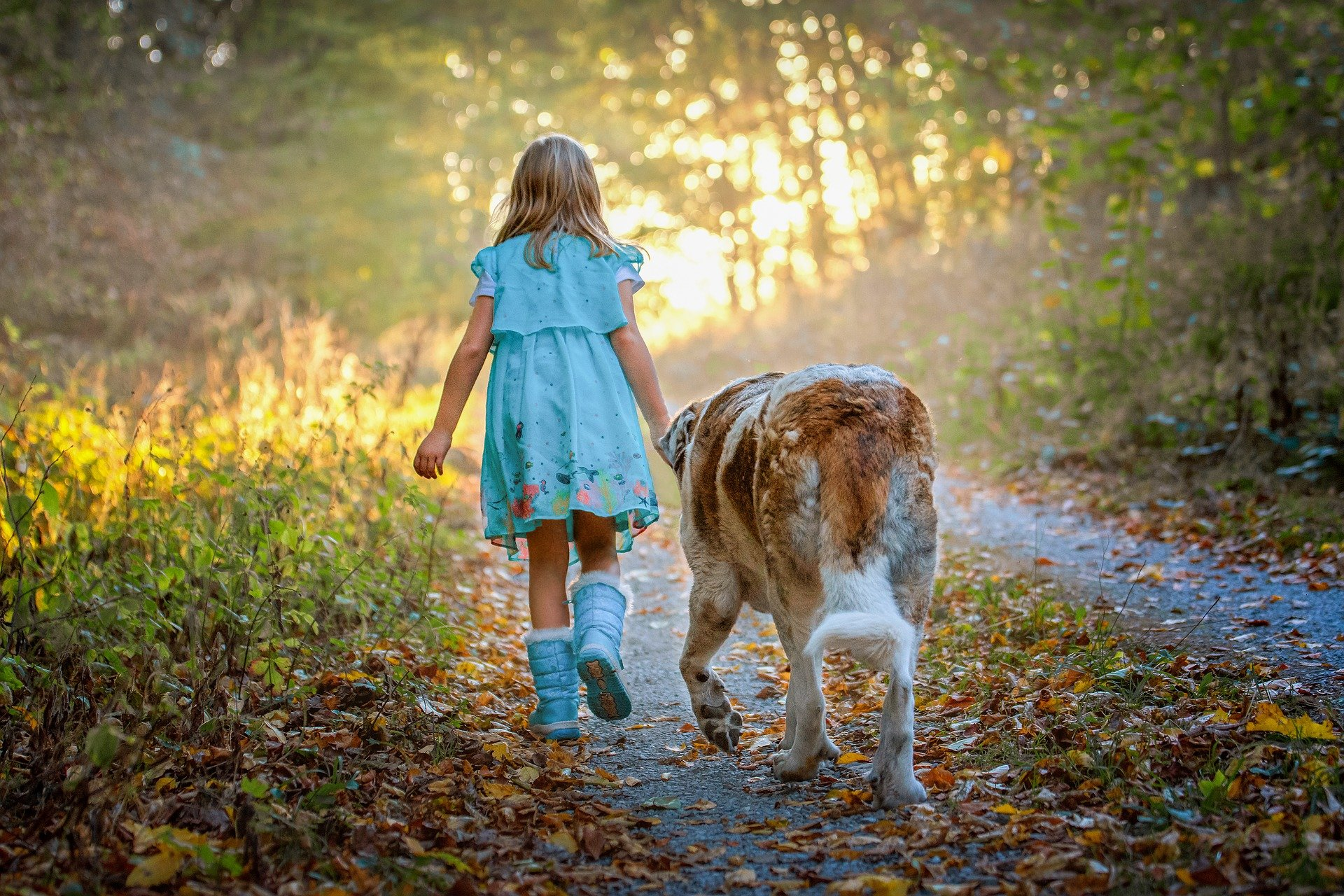 approcher un chien inconnu