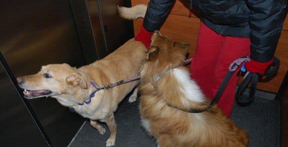 Mon chien a peur de l'ascenseur, que faire ?