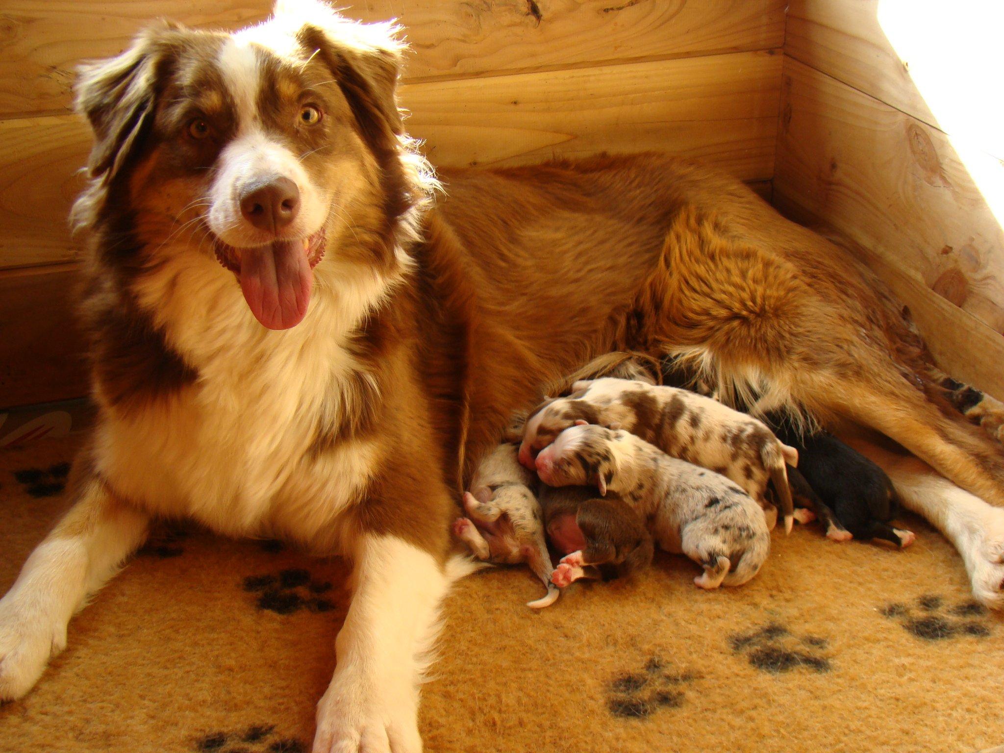 5 astuces pour bien choisir son élevage canin - Eleveur canin