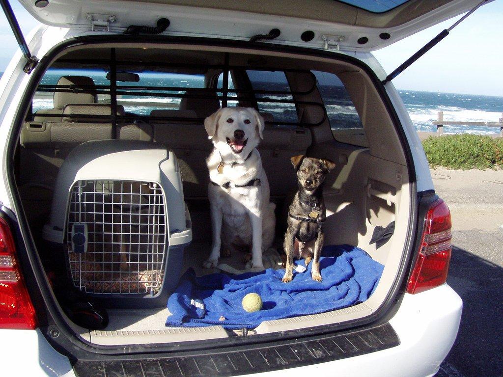 chien et voiture