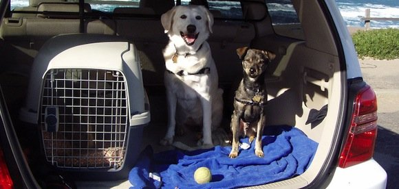 Comment voyager avec son chien dans les meilleures conditions ?