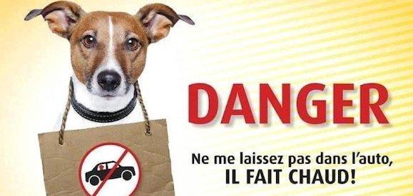 Protégez-vous votre chien du climat ? Attention au coup de chaleur !
