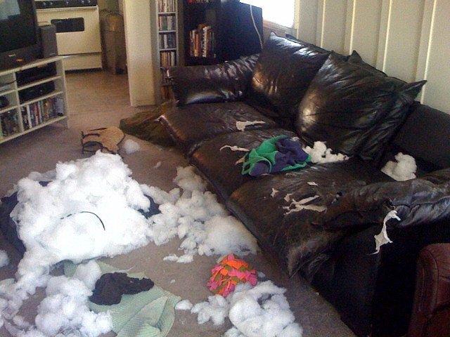 l 39 anxi t de s paration chez le chien comment le soigner. Black Bedroom Furniture Sets. Home Design Ideas