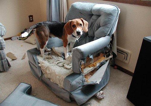 """Résultat de recherche d'images pour """"chien divan dechiqueté"""""""