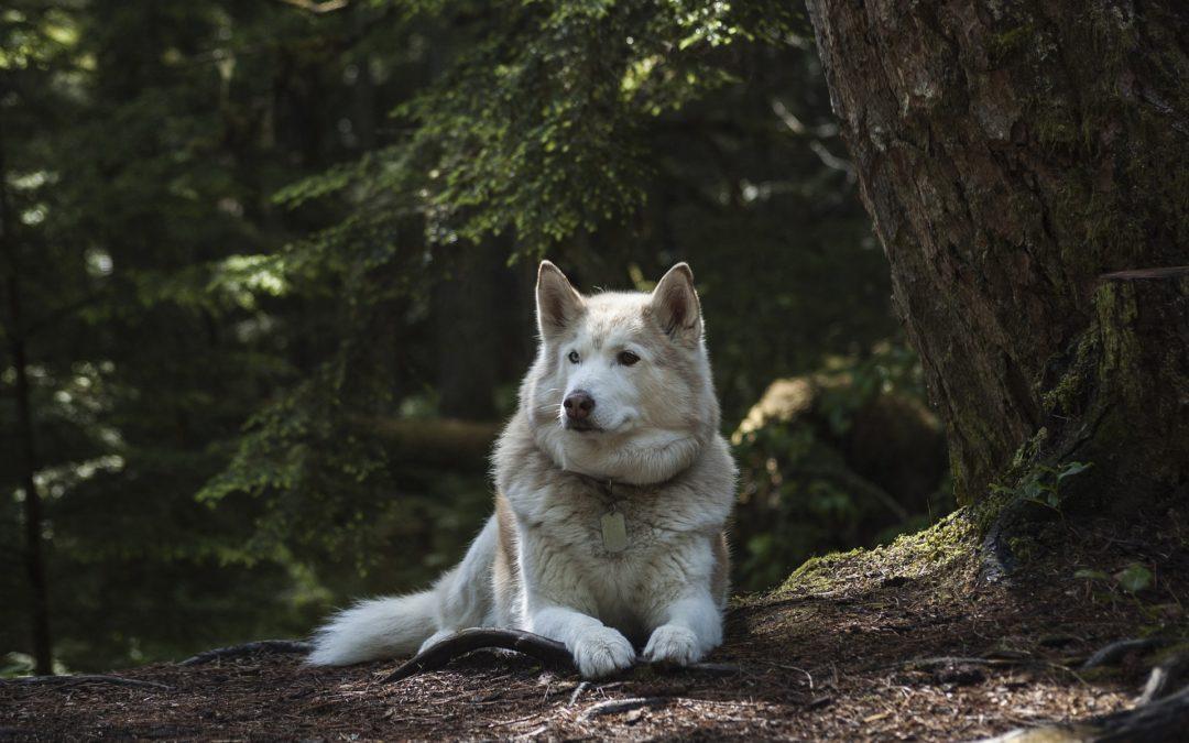 garder son chien en bonne santé