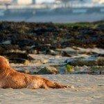 Mon chien à la plage : conseils et précautions