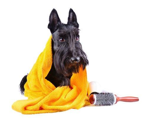 Laver son chien.