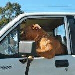 Les dangers de l'anthropomorphisme dans la relation homme/chien