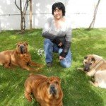 6 conseils pour le nouveau moniteur d'éducation canine MEC1