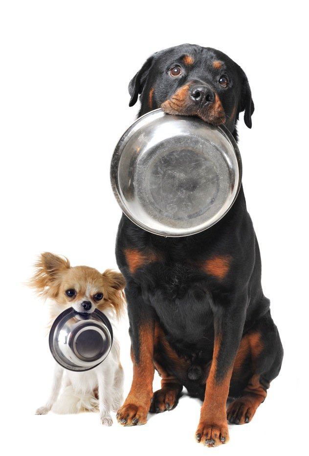Comment choisir les croquettes pour son chien ?