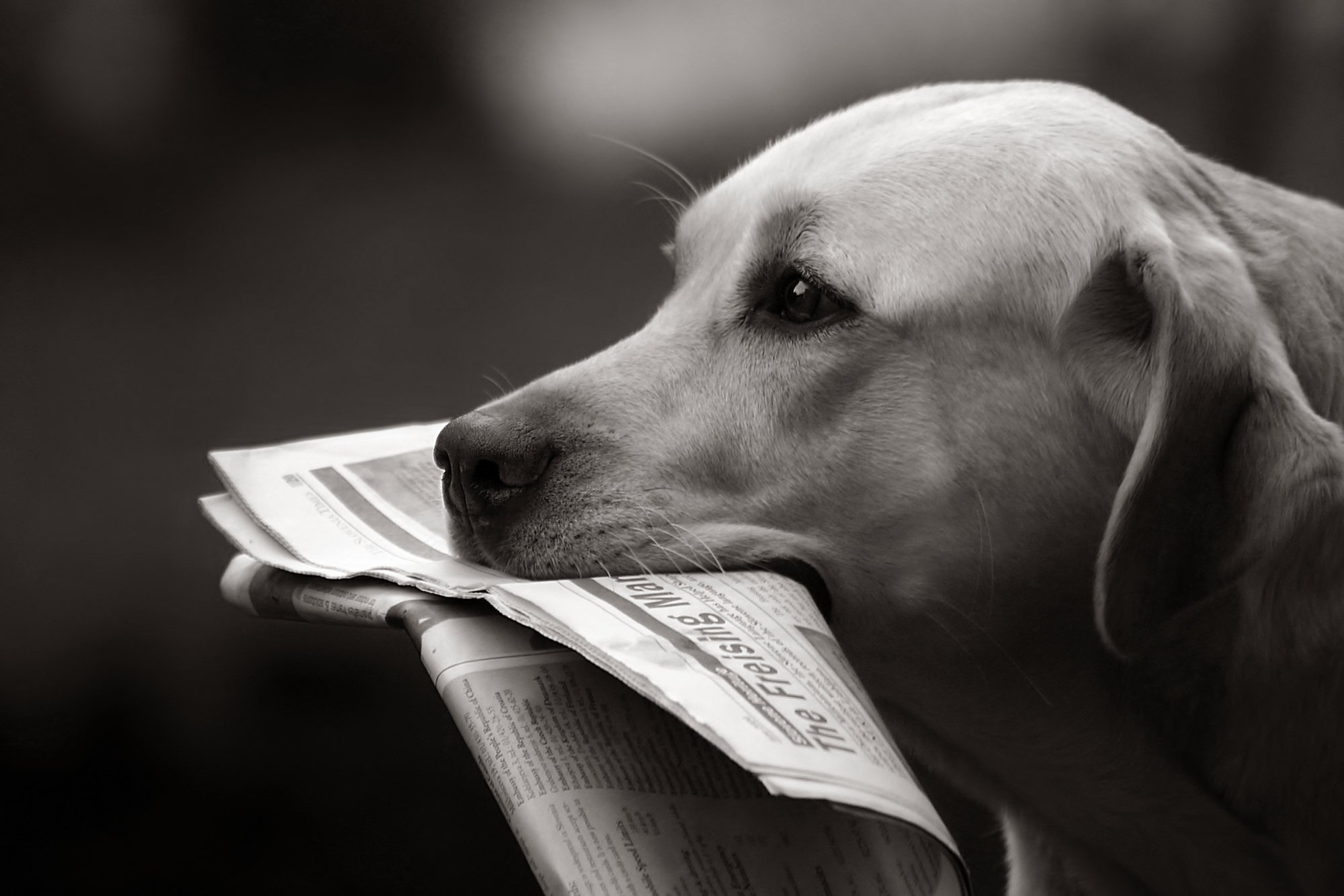 Le facteur et le chien : une relation étrange, sont-ils timbrés ?