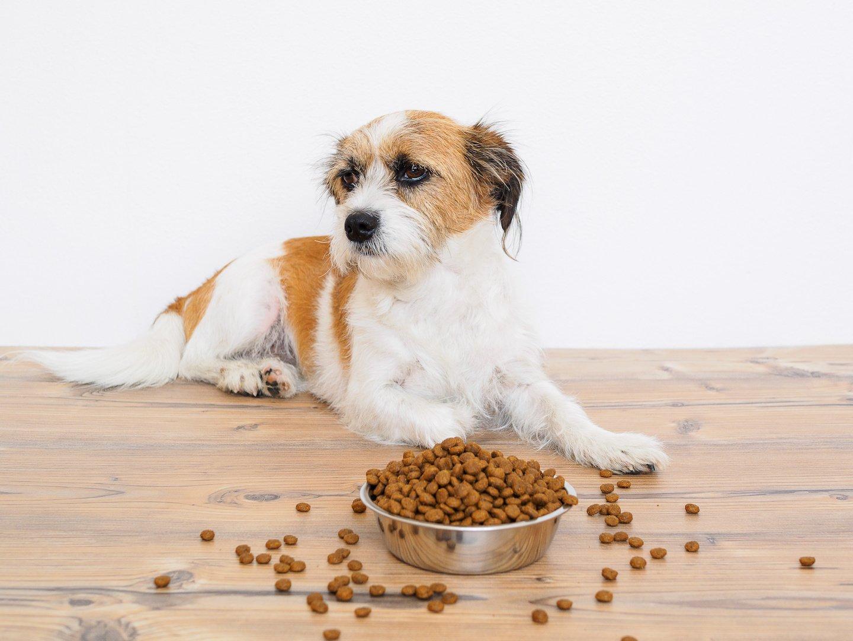 apprendre à son chien à attendre avant d'avoir sa gamelle