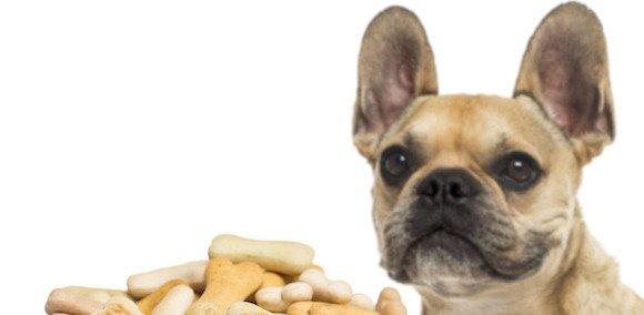 [Vidéo] Comment apprendre à son chien à ne pas se jeter sur sa gamelle au moment du repas ?
