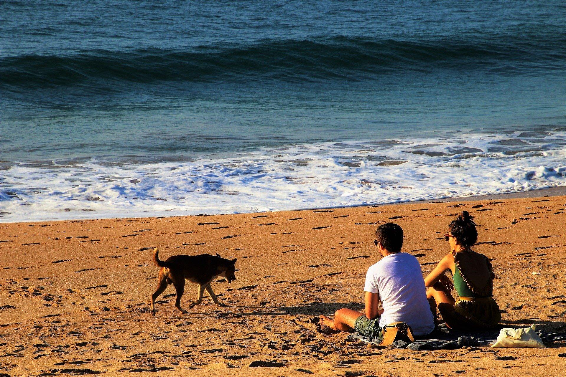 Comment bien voyager avec son chien ?