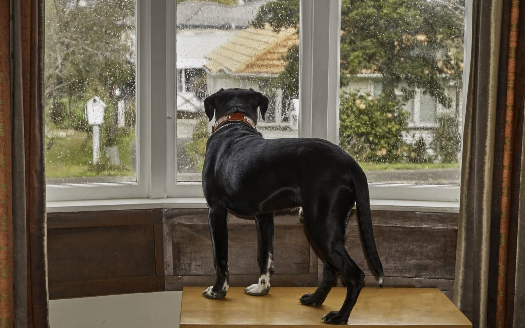 Comment réduire l'anxiété de votre chien ?