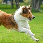 6 jeux pour permettre à mon chien d'utiliser ses instincts naturels de chasse