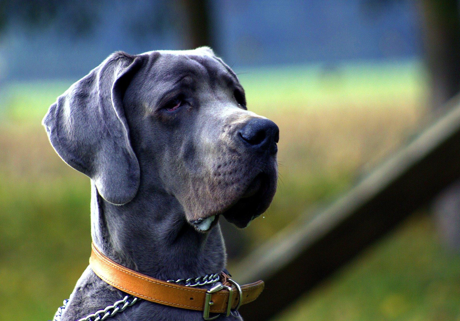 prolonger l'espérance de vie de son chien