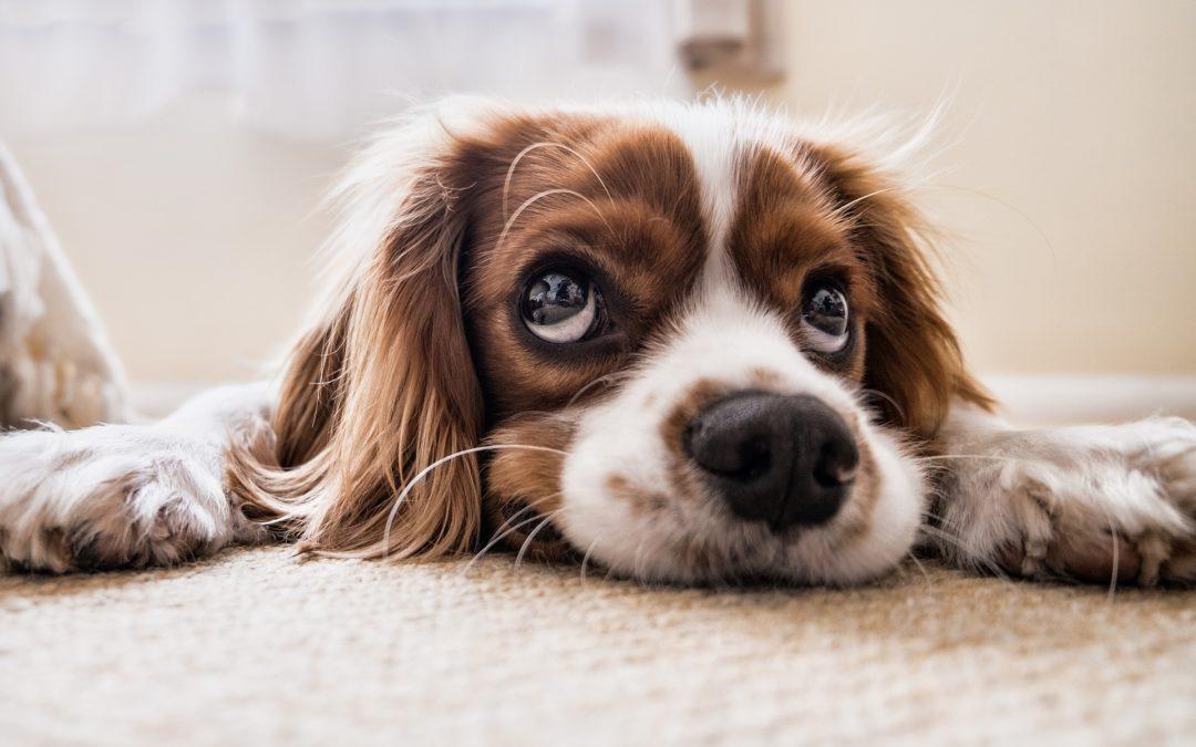 Troubles du comportement du chien : peut-on les corriger ?