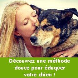 bon-chien-250x250-3