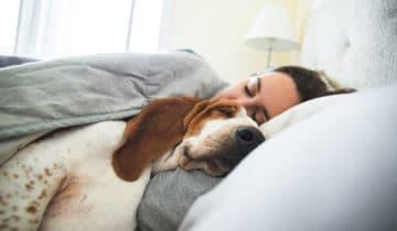 Dormir avec son chien : bonne ou mauvaise idée ?