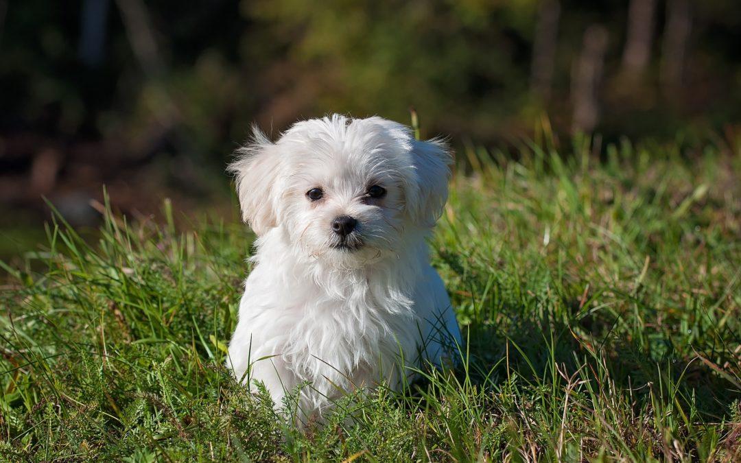 Apprendre la propreté à son chien