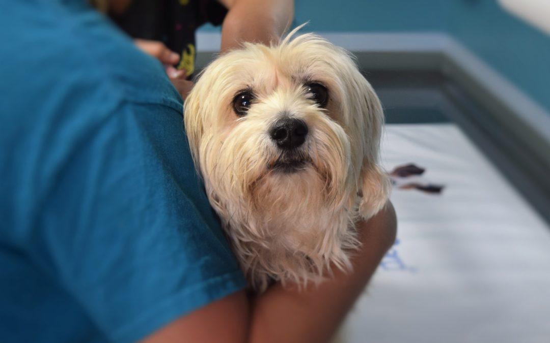 Bronchite et/ou pneumonie du chien : causes, symptômes et traitement