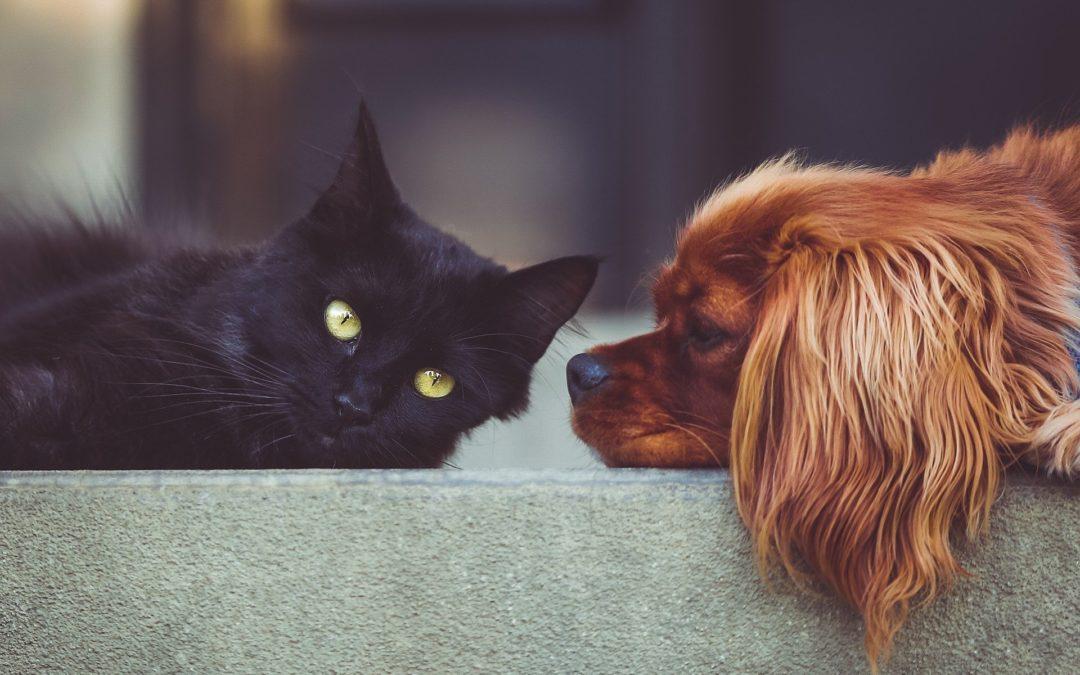 Cohabitation entre chien et chat : quelques conseils