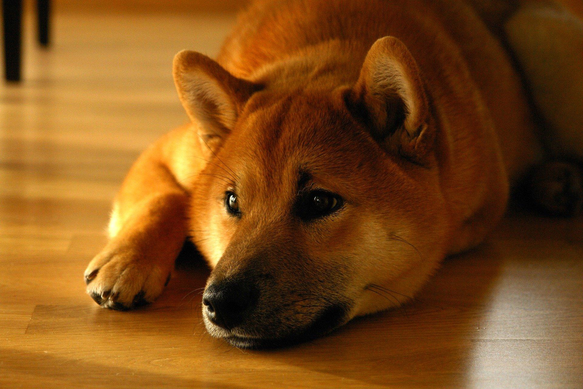 Mon chien est constipé : causes et solutions
