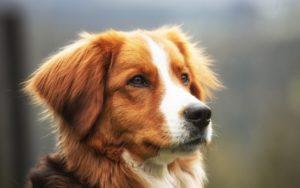 Obstruction digestive du chien