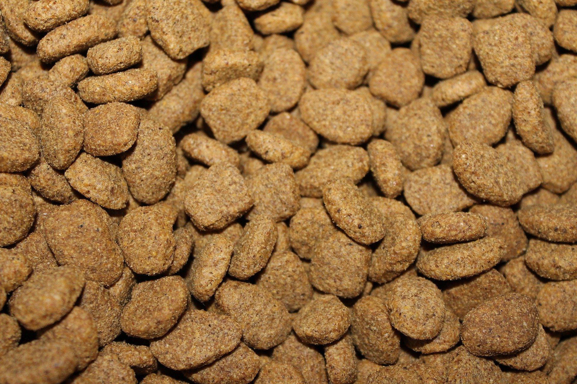 Quelle alimentation pour un vieux chien ?
