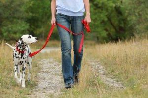 apprentissage de la marche en laisse