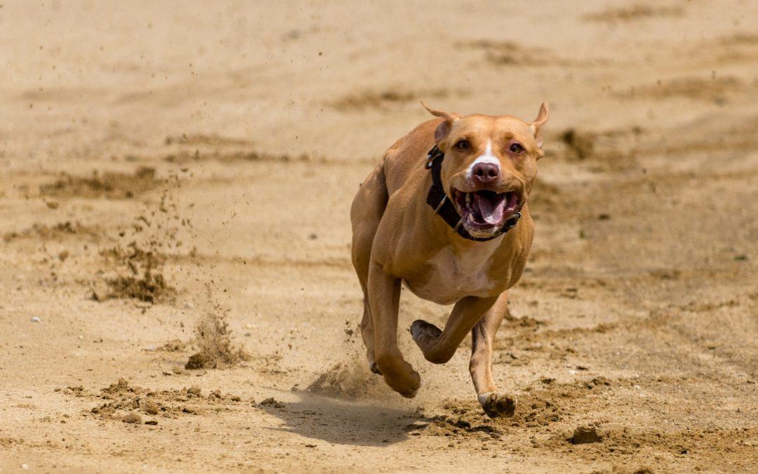 bienfaits du sport pour le chien