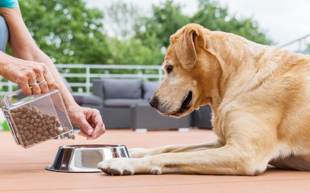 ralentir un chien qui mange trop vite
