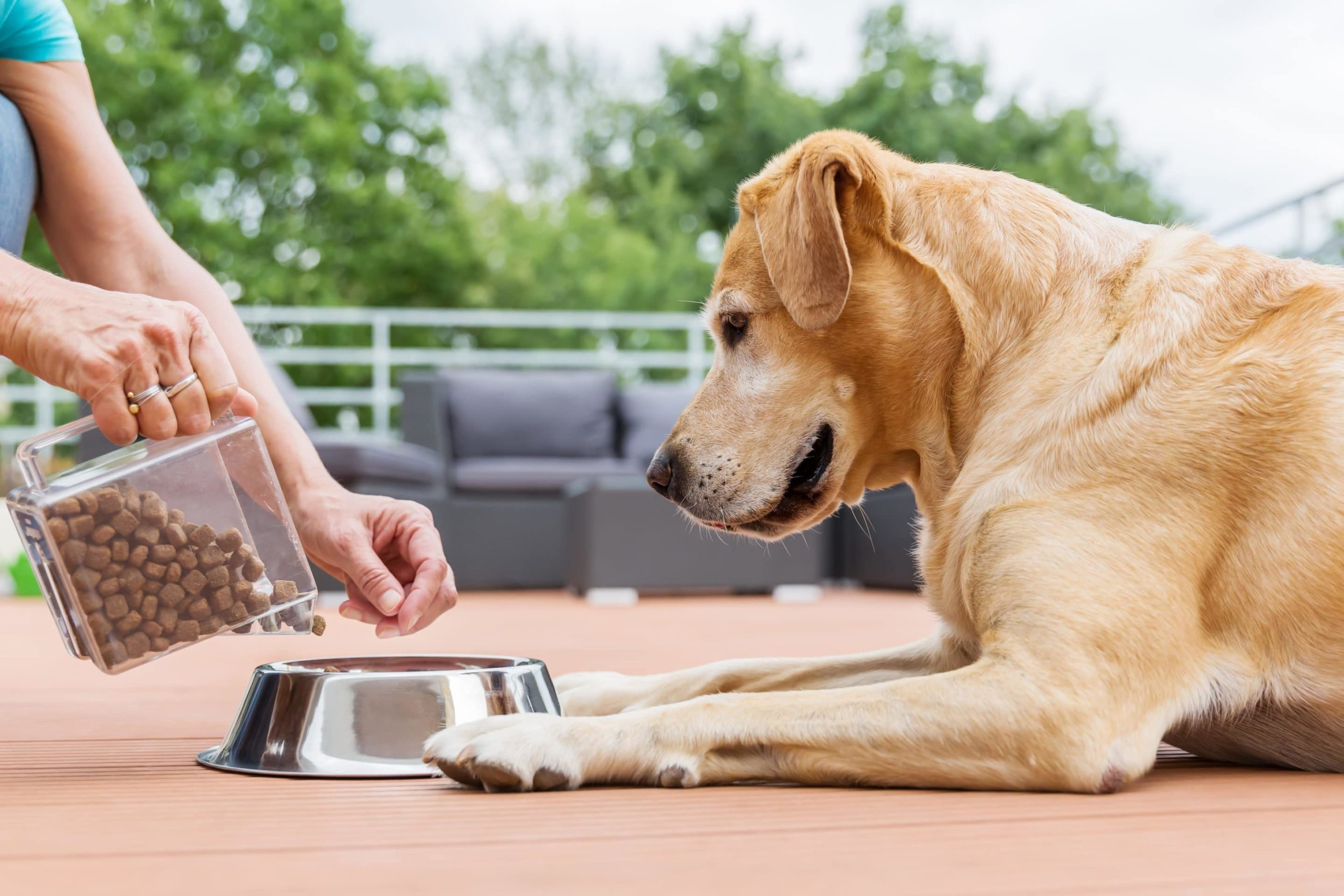 Comment ralentir un chien qui mange trop vite ?