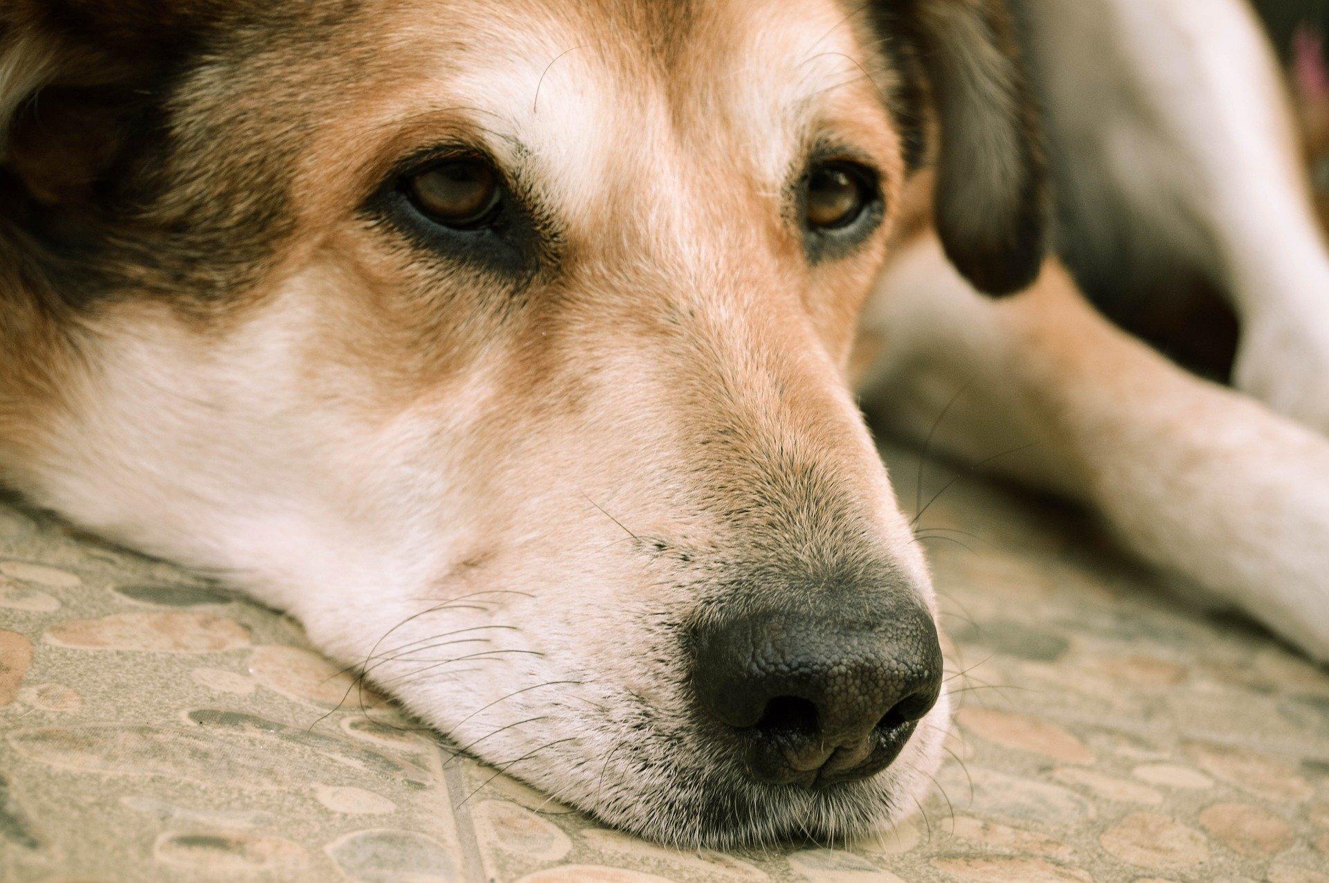 soigner son chien