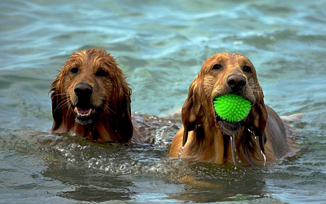 Quels sont les bienfaits du sport pour le chien ?