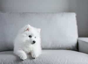 ultrasons pour soigner le chien