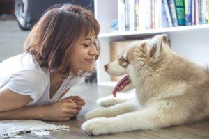 vie en communauté d'un chien