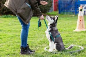 Retirer un terme : éducation amicale et positive chez le chien éducation amicale et positive chez le chien