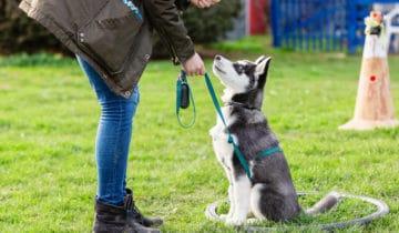 Qu'est-ce que l'éducation amicale et positive chez le chien ?