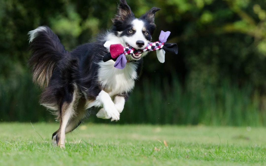Comment éduquer son chien grâce au jeu ?