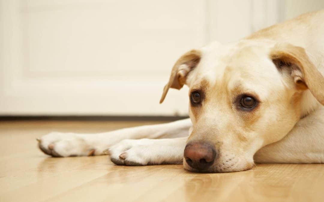 Comment apprendre à son chien à accepter la frustration ?