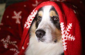 Noël avec son chien