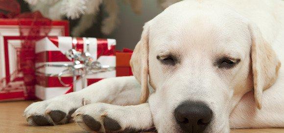 5 conseils pour passer un bon Noël avec son chien