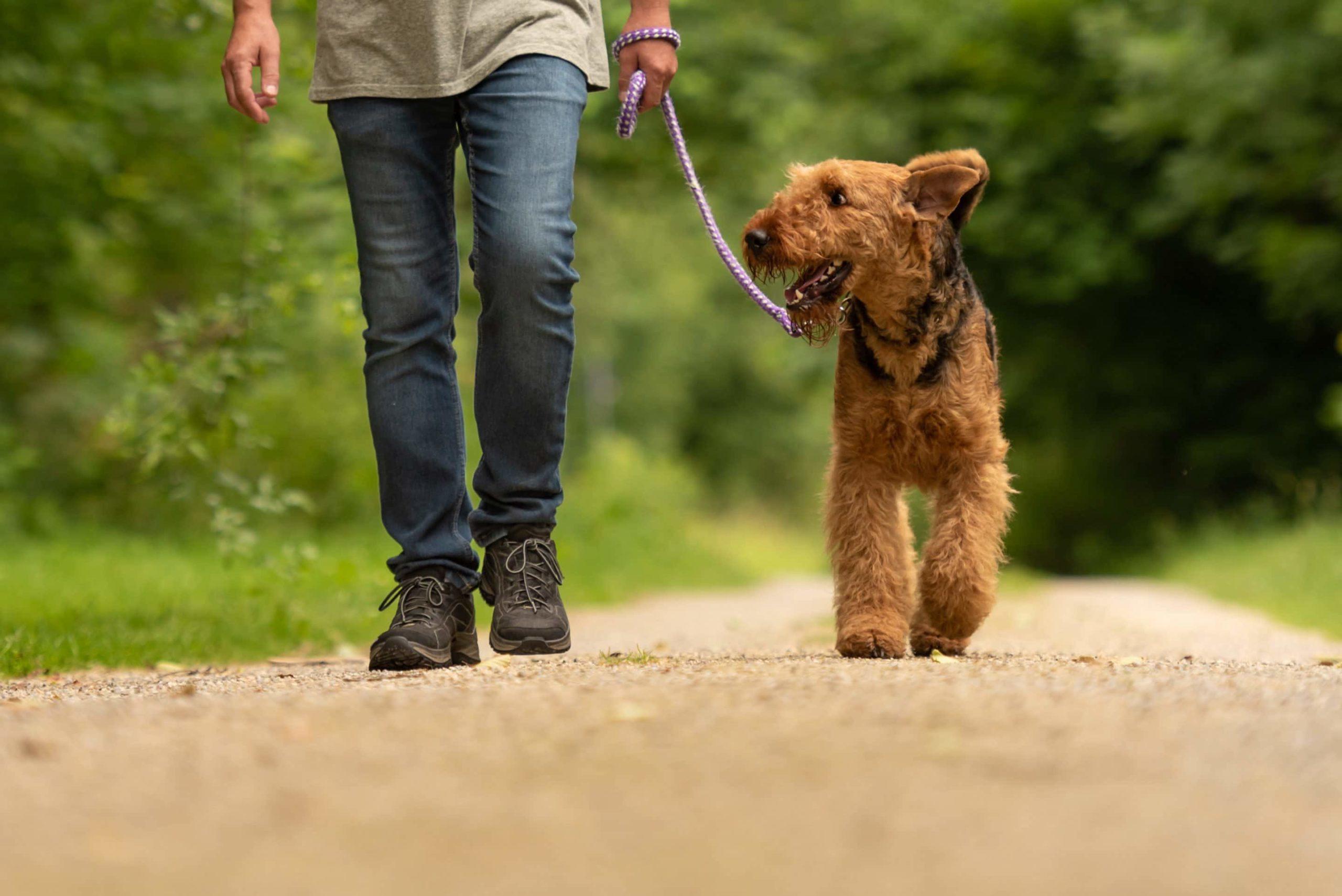 Promener son chien, les bonnes pratiques