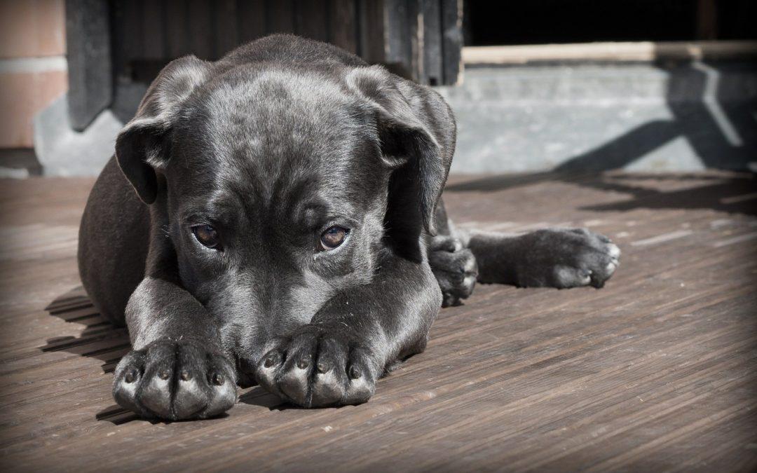 apprendre à son chien à accepter la frustration