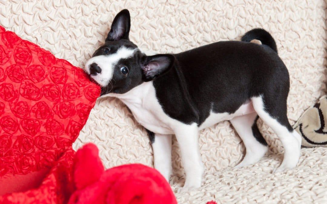 Comment limiter les bêtises de son chien (ou chiot) ?