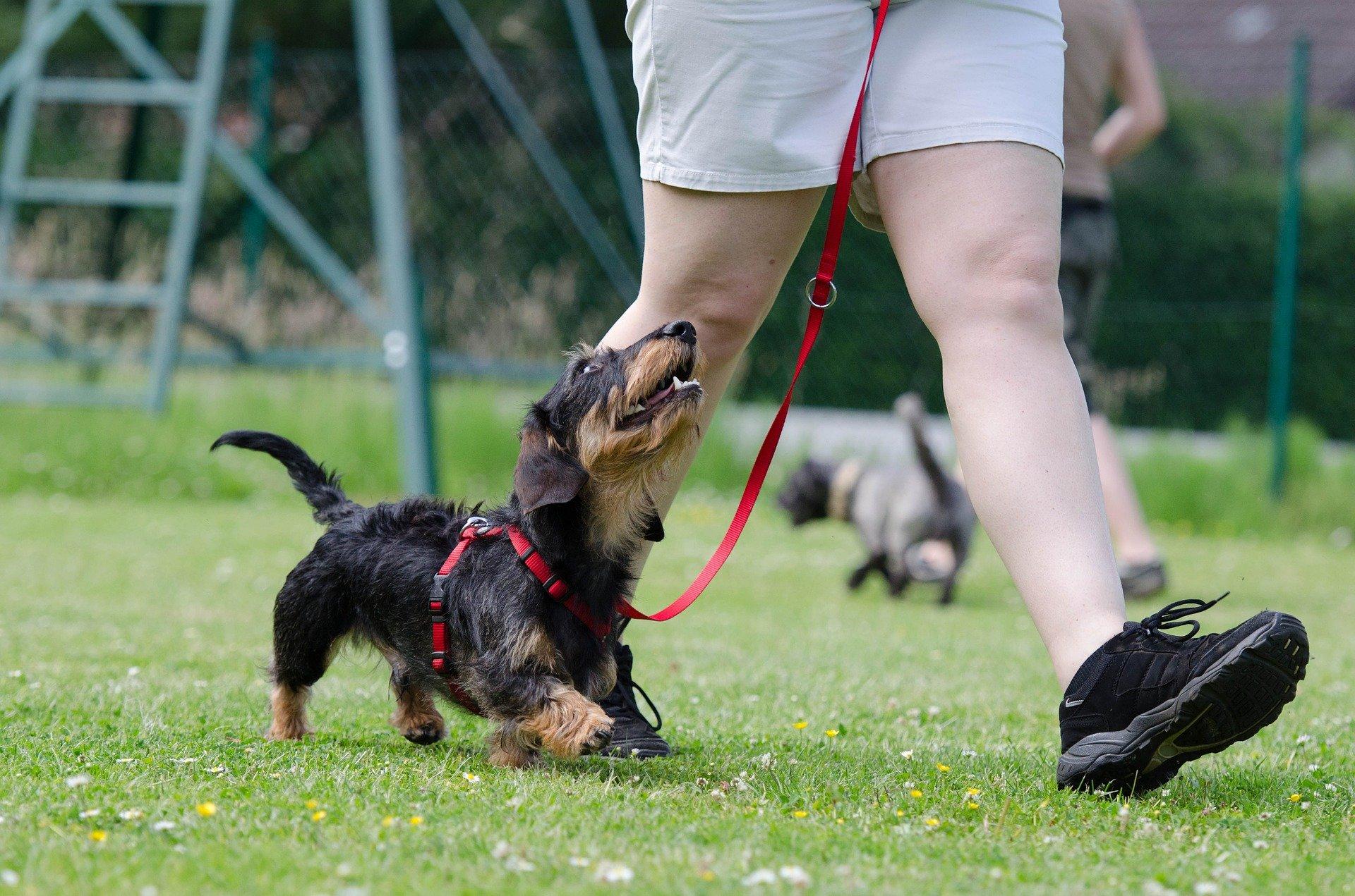 Secrets et conseils pour bien entraîner son chien